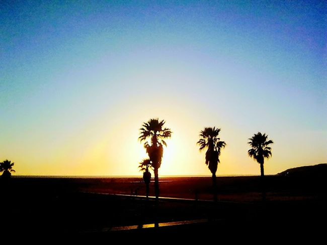 Silhouette Sunset Tree Palm Tree Scenics Nature Tranquility Beauty In Nature Outdoors Sky Travel Destinations No People Day Beach Sun Daytime The Street Photographer - 2017 EyeEm Awards The Great Outdoors - 2017 EyeEm Awards EyeEmNewHere Figueira Da Foz, Portugal Tranquility Nature
