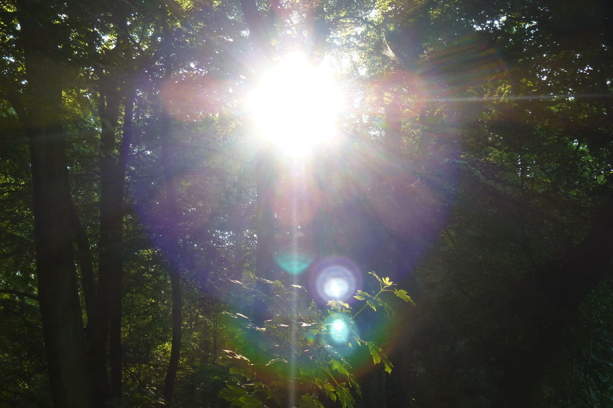 Beauty In Nature Day Forest Green Color Growth Lens Flare Nature No People Outdoors Scenics Shine Bright Sun Bright Light Sunbeam Sunlight Tranquil Scene Tranquility Tree Sunrays Through The Branches Sunbeams Through Tree Shining Bright