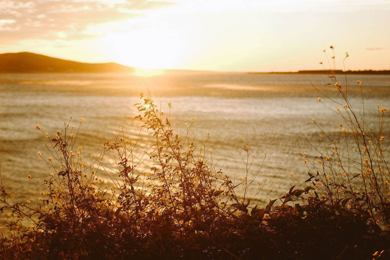 Sun setting over the ocean Beauty Beauty In Nature Day Field Flower Flower Head Gold Colored Idyllic Landscape Nature No People Outdoors Plant Scenics Sea Sky Summer Sun Sunbeam Sunlight Sunset Tranquil Scene Water