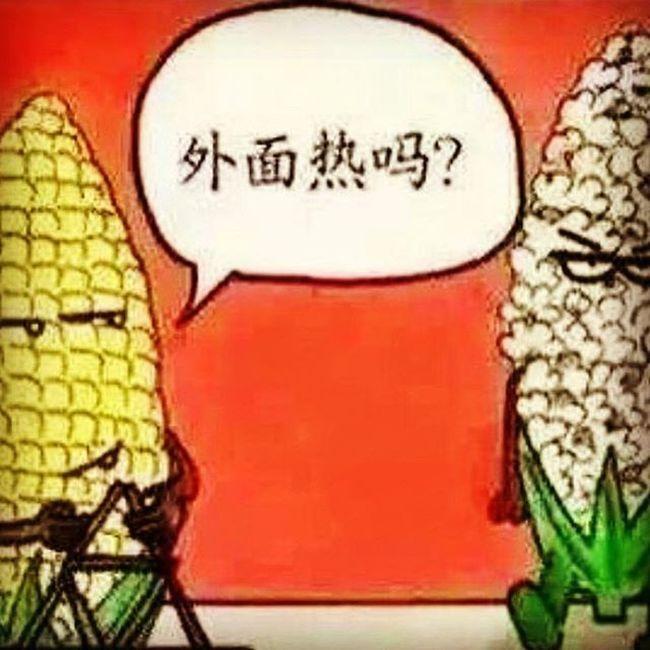 外面热吗? Estate Caldo 夏天 热 玉米