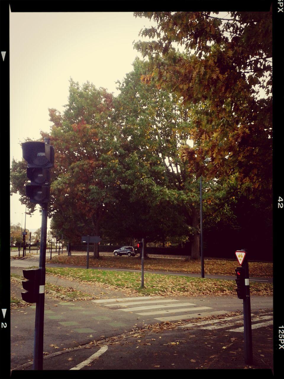 tree, road, road sign, street light, street, outdoors, transportation, no people, day, stoplight, sky, nature