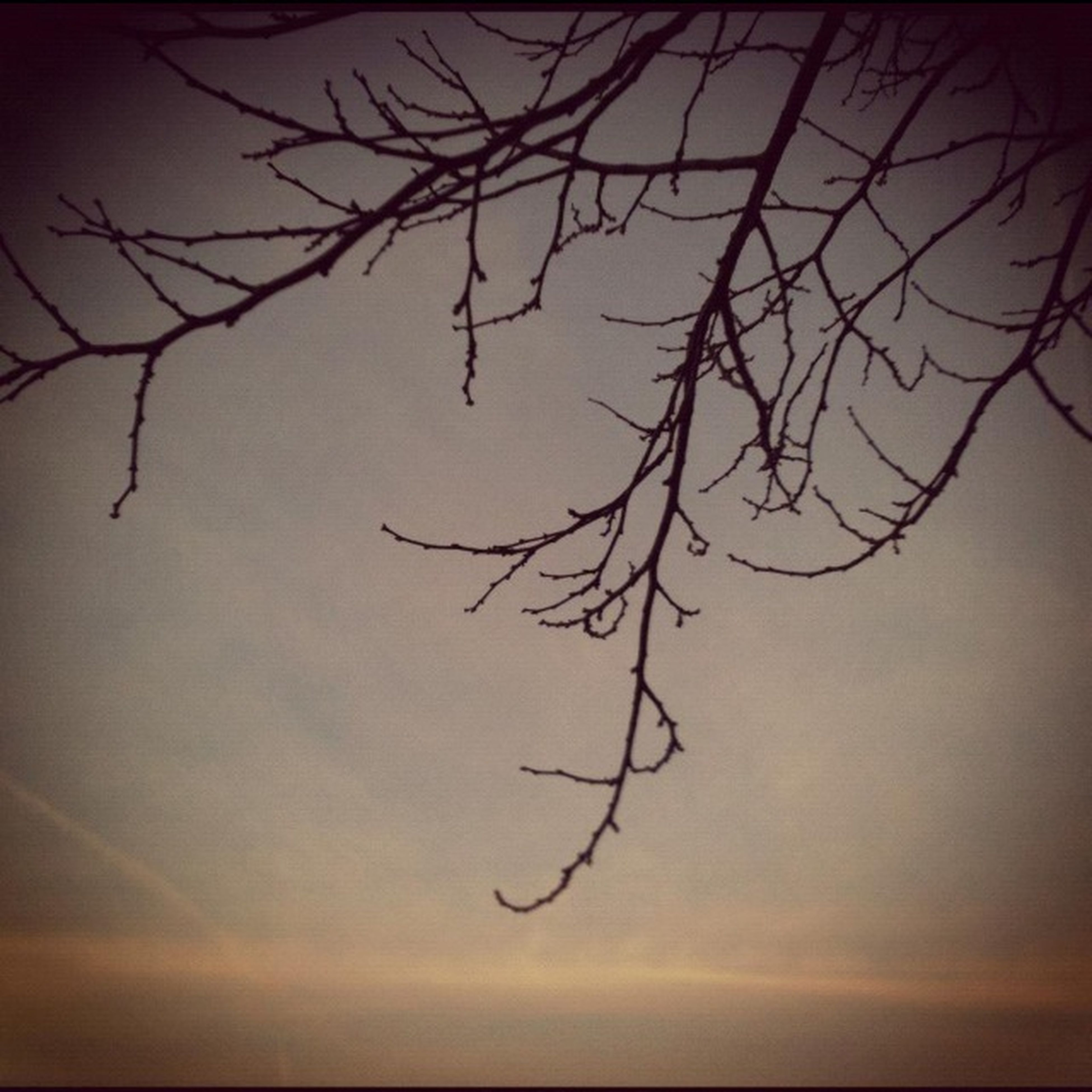 bare tree, branch, tranquility, sunset, sky, nature, silhouette, tranquil scene, scenics, beauty in nature, tree, dusk, idyllic, outdoors, dead plant, no people, growth, twig, low angle view, single tree
