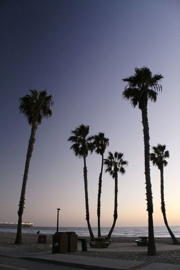Tree Beach Palm Tree Water Silhouette Sea Sunset Tranquility Sky No People Beauty In Nature Horizon Over Water Photograph Outdoors Scenics Night Nature Oceanside, Ca Oceanside