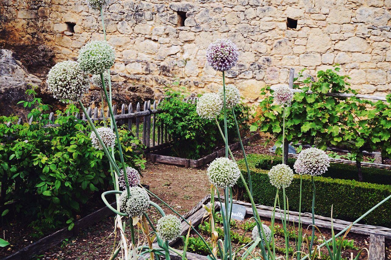 garden Castelnaudary