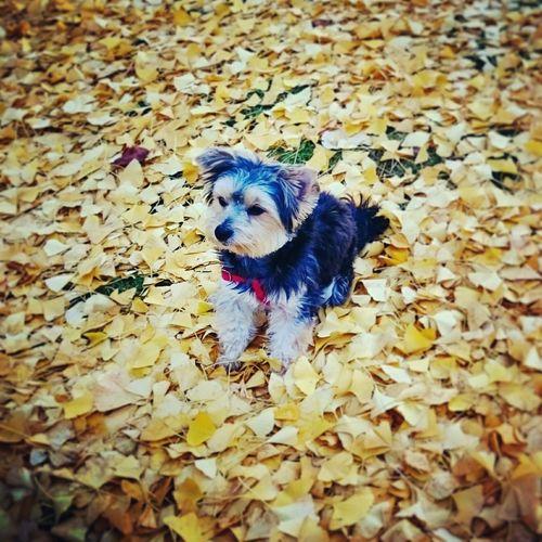 Dogoftheday Enjoying The Sun Nature Autumn Autumn Colors Playingwiththeanimals