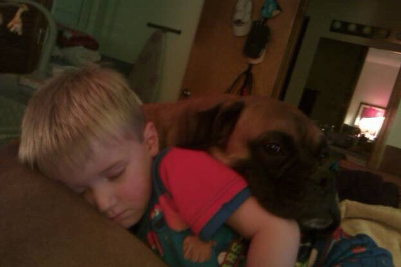 Colour Of Life Little Boy And Dog Boy Sleeping On Dog Boy All Curled Up loving dog A Great Pillow