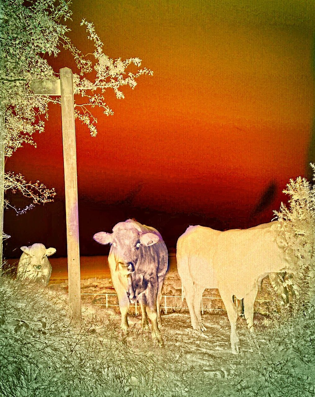 mammal, animal themes, domestic animals, nature, livestock, field, no people, cow, grass, outdoors, tree, day, beauty in nature