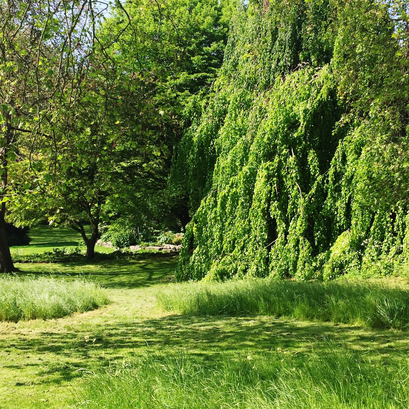 Symphony Of Green Green On Green