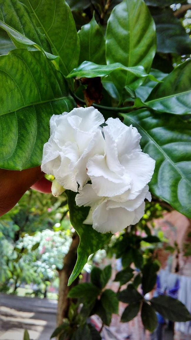 Nature is beauty! Nature Flower Beauty In Nature Check This Out