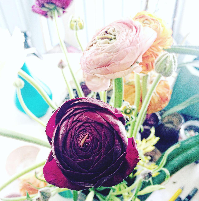 Ranunculus Pastel Flowers