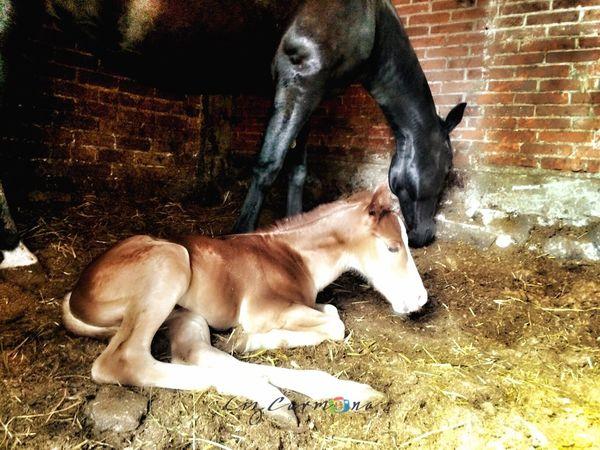 Madre e hijo Horses Babyhorse Son Mom