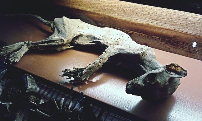 """""""Das Recht auf ein gescheitertes Leben ist unantastbar!"""" Dark Photography Dead Animals Fade Away Corpse"""