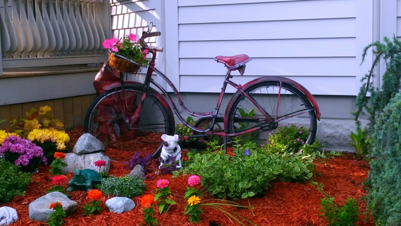 flower, bicycle, building exterior, plant, built structure, land vehicle, transportation, outdoors, architecture, mode of transport, day, domestic animals, no people, growth, nature, stationary, mammal, pets, animal themes, window box, freshness