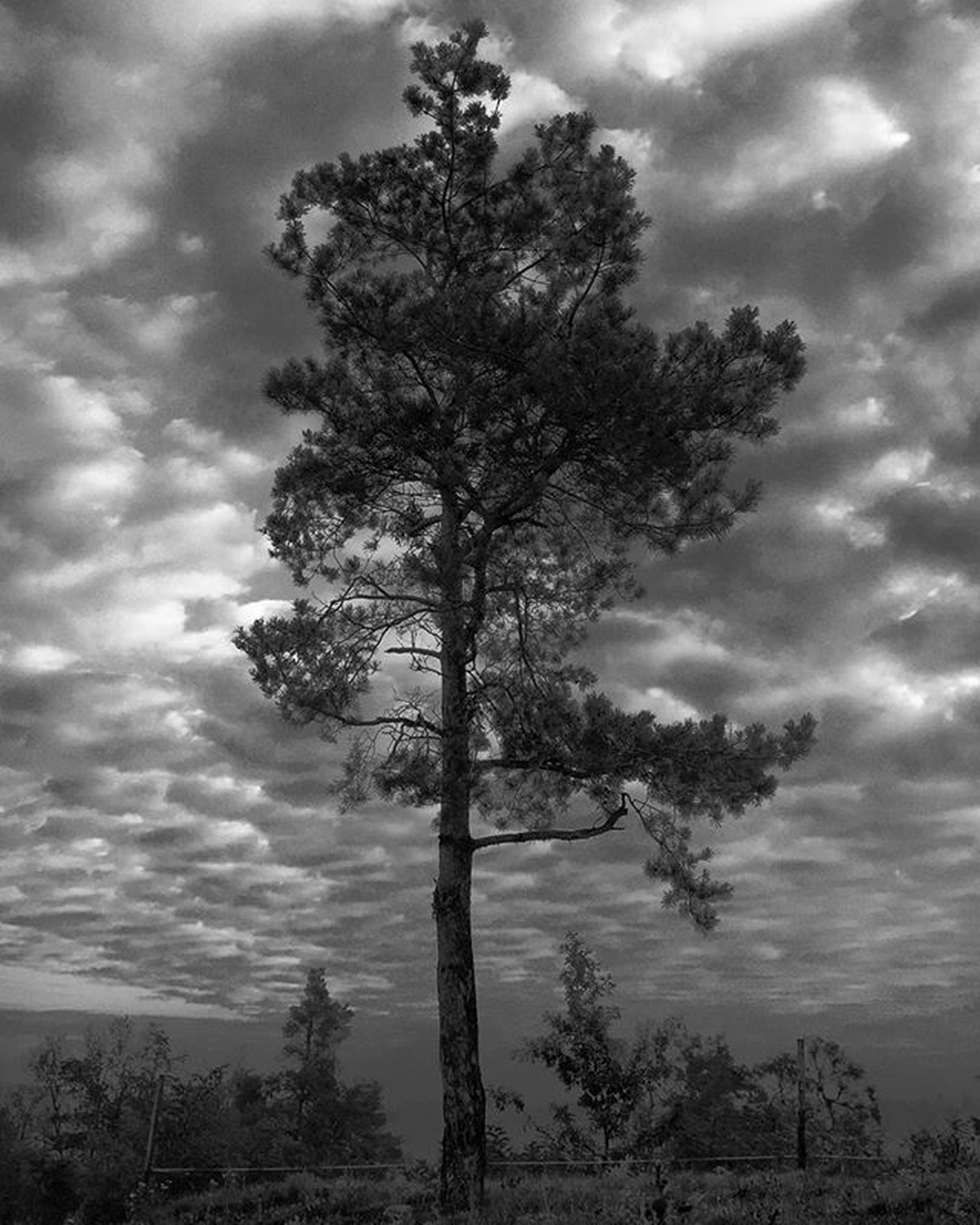 tree, sky, cloud - sky, cloudy, tranquility, silhouette, low angle view, tranquil scene, bare tree, nature, scenics, cloud, beauty in nature, weather, branch, overcast, tree trunk, growth, dusk, outdoors