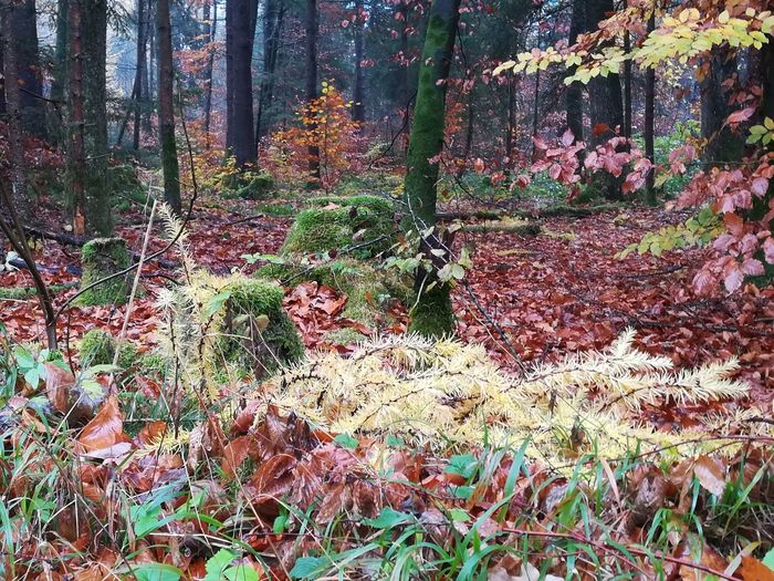 Tree Multi Colored Beauty In Nature Forest Autumn Nature Outdoors No People Day Growth Tree Trunk Plant Close-up