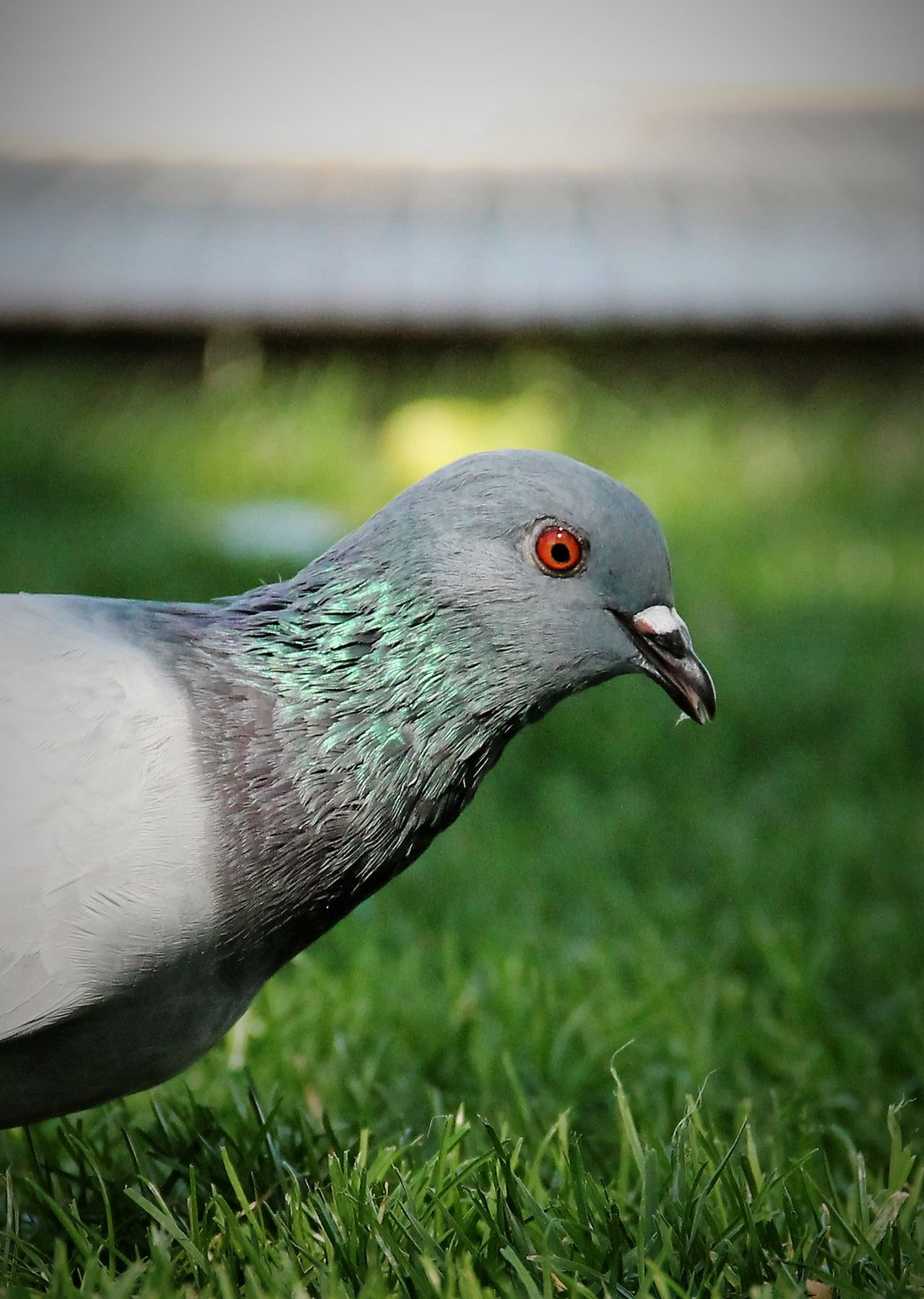 Animal Eye Animal Head  Animal Themes Animals In The Wild Beak Beauty In Nature Bird Close-up Day Field Focus On Foreground Grass Grassland Green Green Color Nature No People One Animal Outdoors Profile Profile View Side View Tranquil Scene Tranquility El Tiempo Detenido eyeemgalery