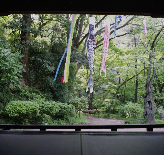 三渓園 鯉のぼり Relaxing Hello World 120 Film Film Photography Rolleicord Film ローライコード Eyeemphotography EyeEm Best Shots