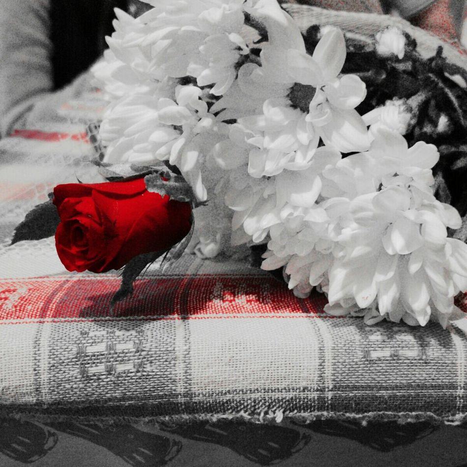 Taking Photos Shades Of Grey Hot Red