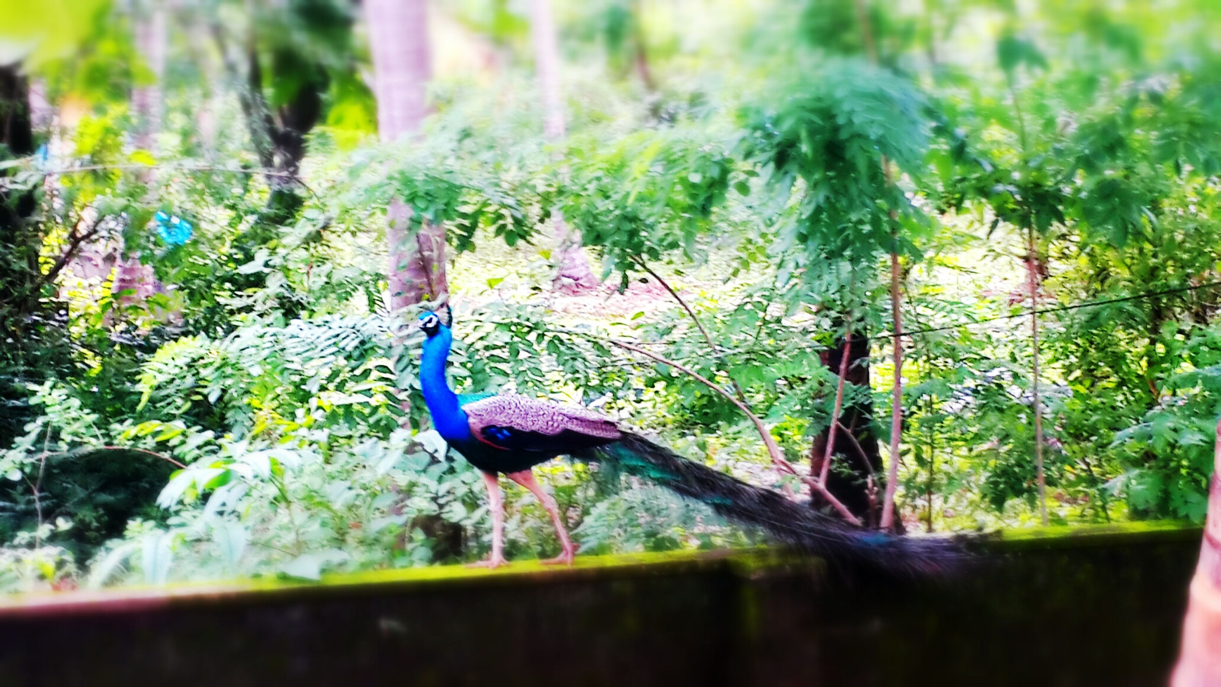 bird, animals in the wild, animal themes, wildlife, one animal, water, tree, nature, green color, beauty in nature, lake, plant, side view, tranquility, outdoors, day, focus on foreground, no people, growth, forest