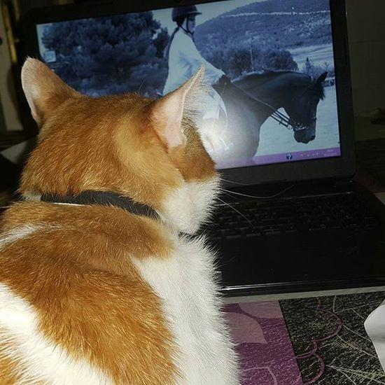 Mirando mi foto de pantalla del ordenador Love Cat Verybeautiful BIG Bigboy