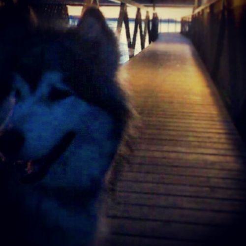 Kv ällspromenad Hund Stranden Hundvakt mys morton