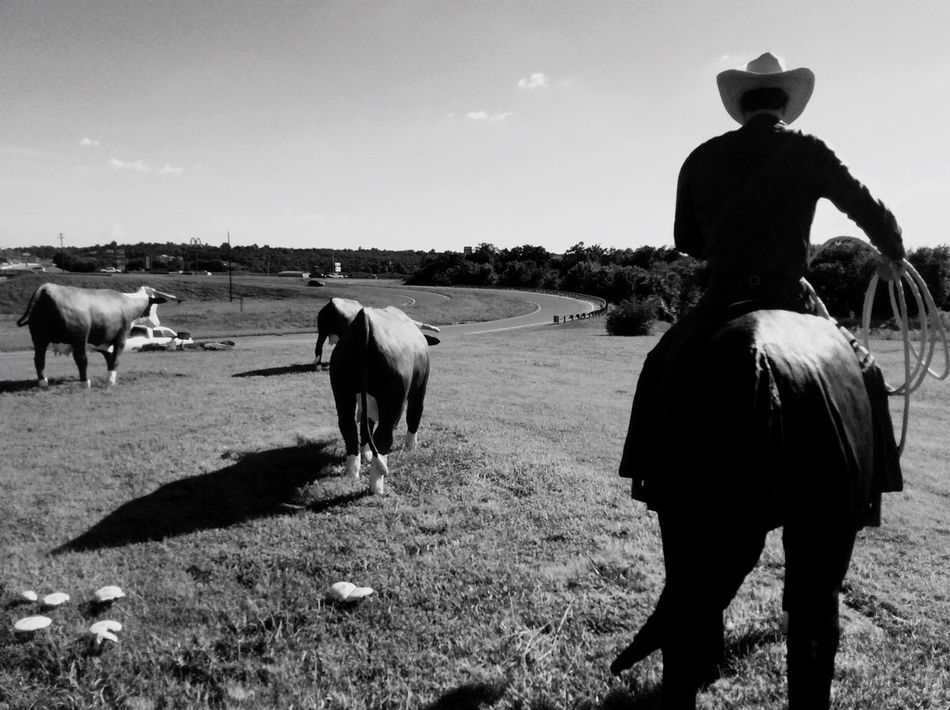 Beautiful stock photos of cowboy, Animal Representation, Cattle, Cowboy, Cowboy Hat