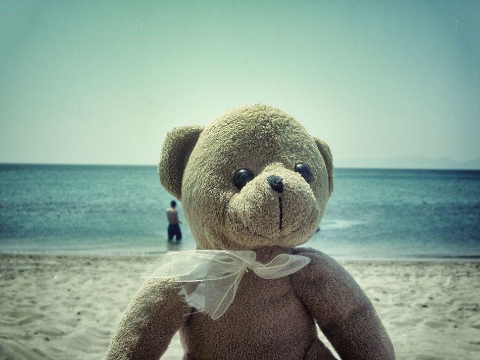 Beautiful stock photos of teddy bear, Beach, Clear Sky, Close-Up, Copy Space