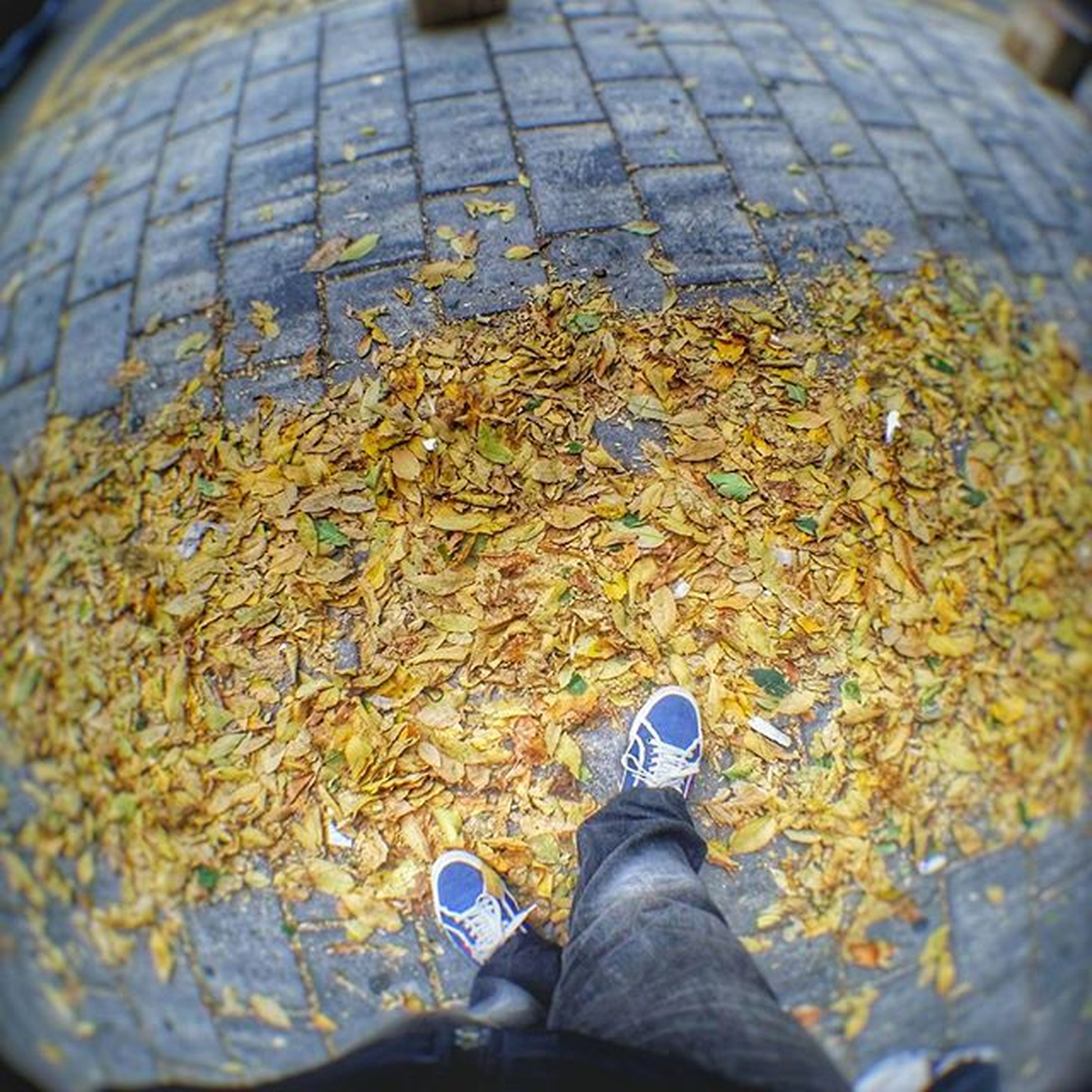 low section, person, shoe, personal perspective, standing, human foot, water, lifestyles, leaf, men, footwear, unrecognizable person, high angle view, reflection, autumn, puddle, leisure activity