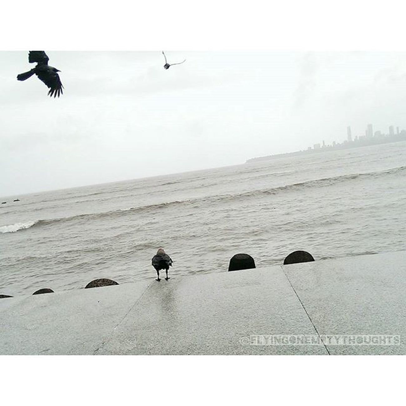 •Murder at the sea• (1) Mumbai Mumbai_uncensored Sea Toiphotoday worldphotographyday photography bnwbutnot birds nature VSCOcam bombay mumbaiigers city cityscapes landscape travel