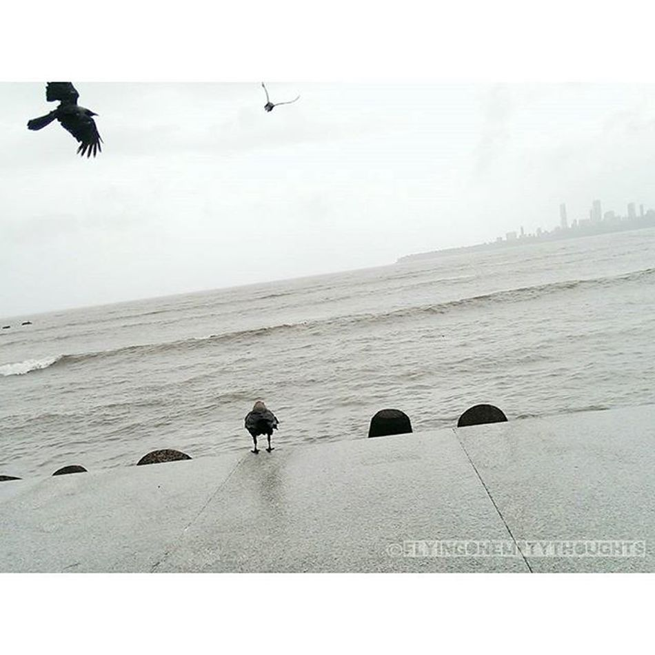 •Murder at the sea• (1) Mumbai Mumbai_uncensored Sea Toiphotoday worldphotographyday photography bnwbutnot birds nature VSCOcam bombay mumbaiigers city cityscapes landscape travel