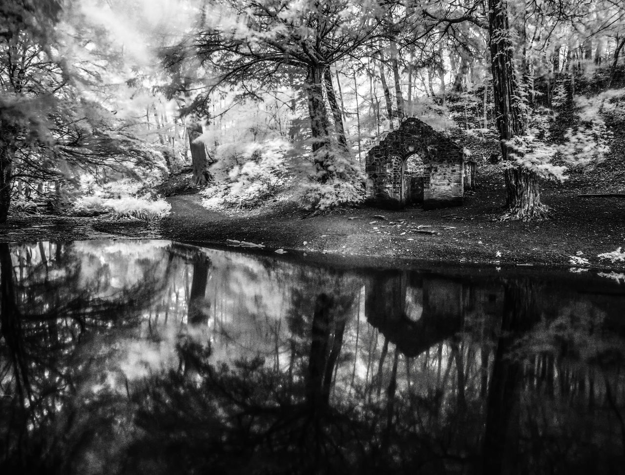 Gothic Folly in Rectory Wood, Church Stretton, Shropshire, England. Beauty In Nature Close-up Day Gothic Growth Idyllic Infrared Lake Lakeshore Long Exposure Nature No People Non-urban Scene Outdoors Plant Reflection Scenics Sky Standing Water Tranquil Scene Tranquility Tree Water Weather