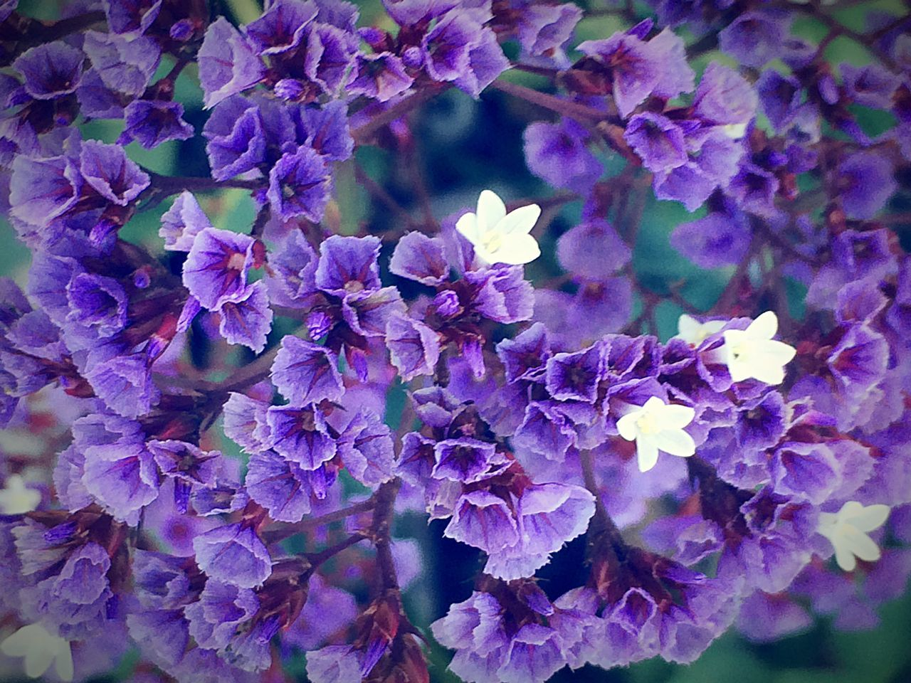 purple, flower, nature, growth, beauty in nature, plant, no people, lilac, blooming, outdoors, fragility, close-up, freshness, day