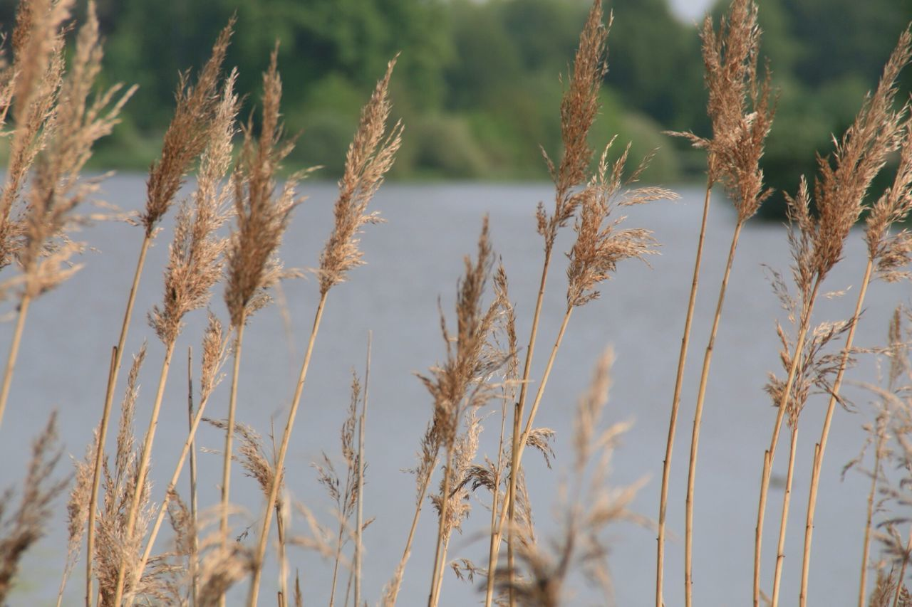 Beautiful stock photos of river, Day, Dried Plant, Focus On Foreground, No People