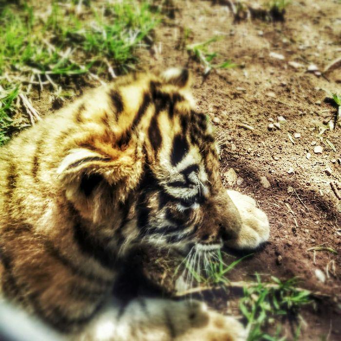 Me parecio ver a un lindo gatito! :-p
