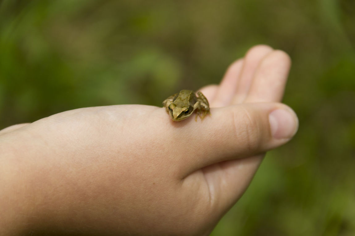 Besuch EyeEm Nature Lover Frog Frosch Froschkönig Garden Giardino Gradina Hand Hanging Out Nature Nature On Your Doorstep Nature_collection Protecting Where We Play Visitor