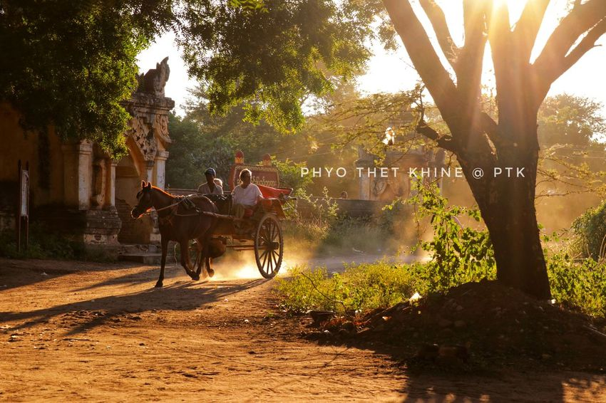 Outdoorphotography Cannon 80D Bagan, Myanmar Evening Time Relaxing Tree Horse Cart Netural