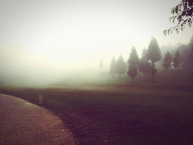 Foggy Days while travelling Beautiful Foggy Morning Fog In The Trees EyeEm Best Shots EyeEm Best Shots - Nature Eyem Nature Lovers  Check This Out Relaxing