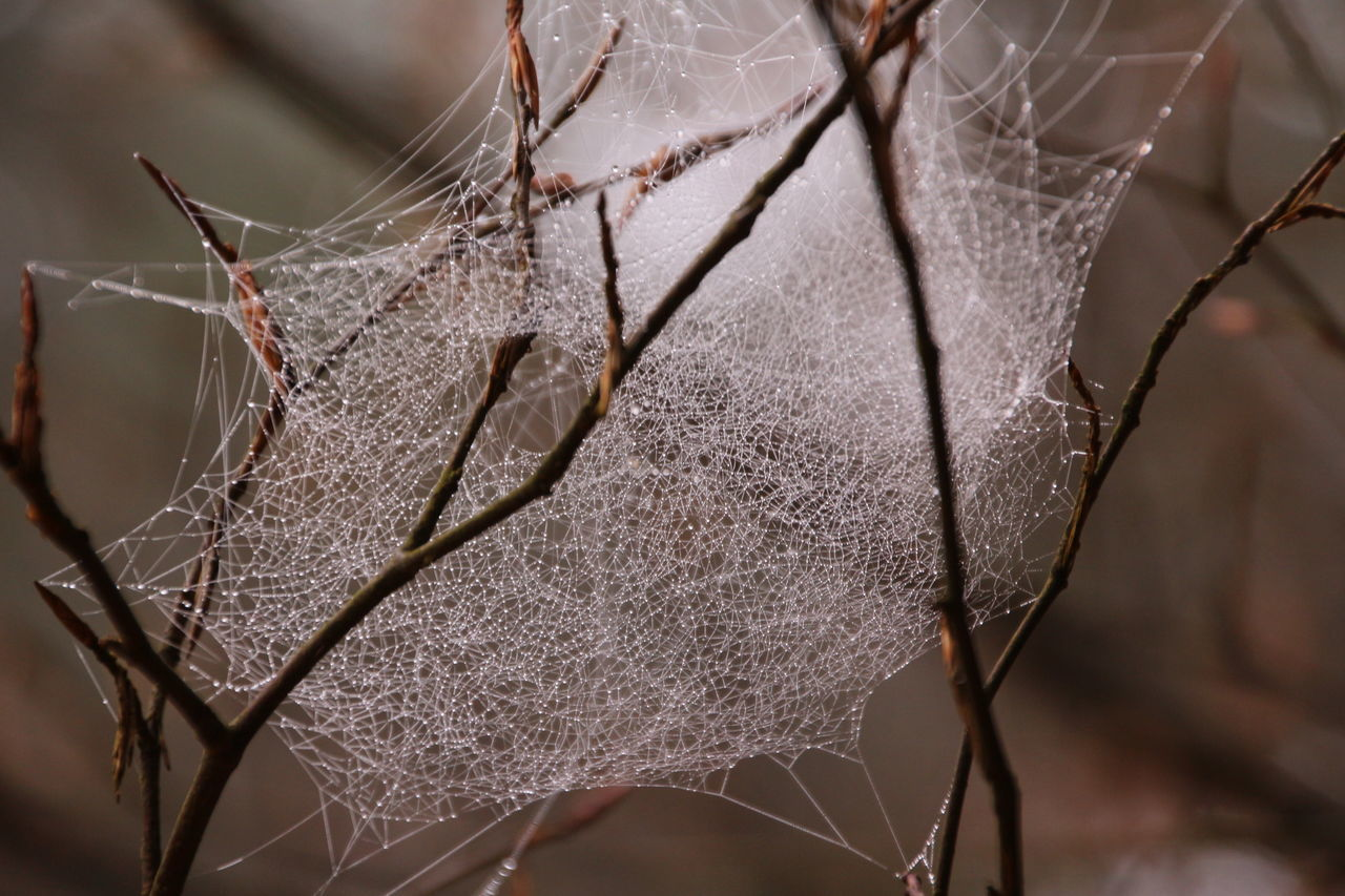 Spooky spiderweb 😨😨 Close-up Spider Web Nature Trapped No People Fragility Insect Plant Outdoors Day Animal Themes Branch Web