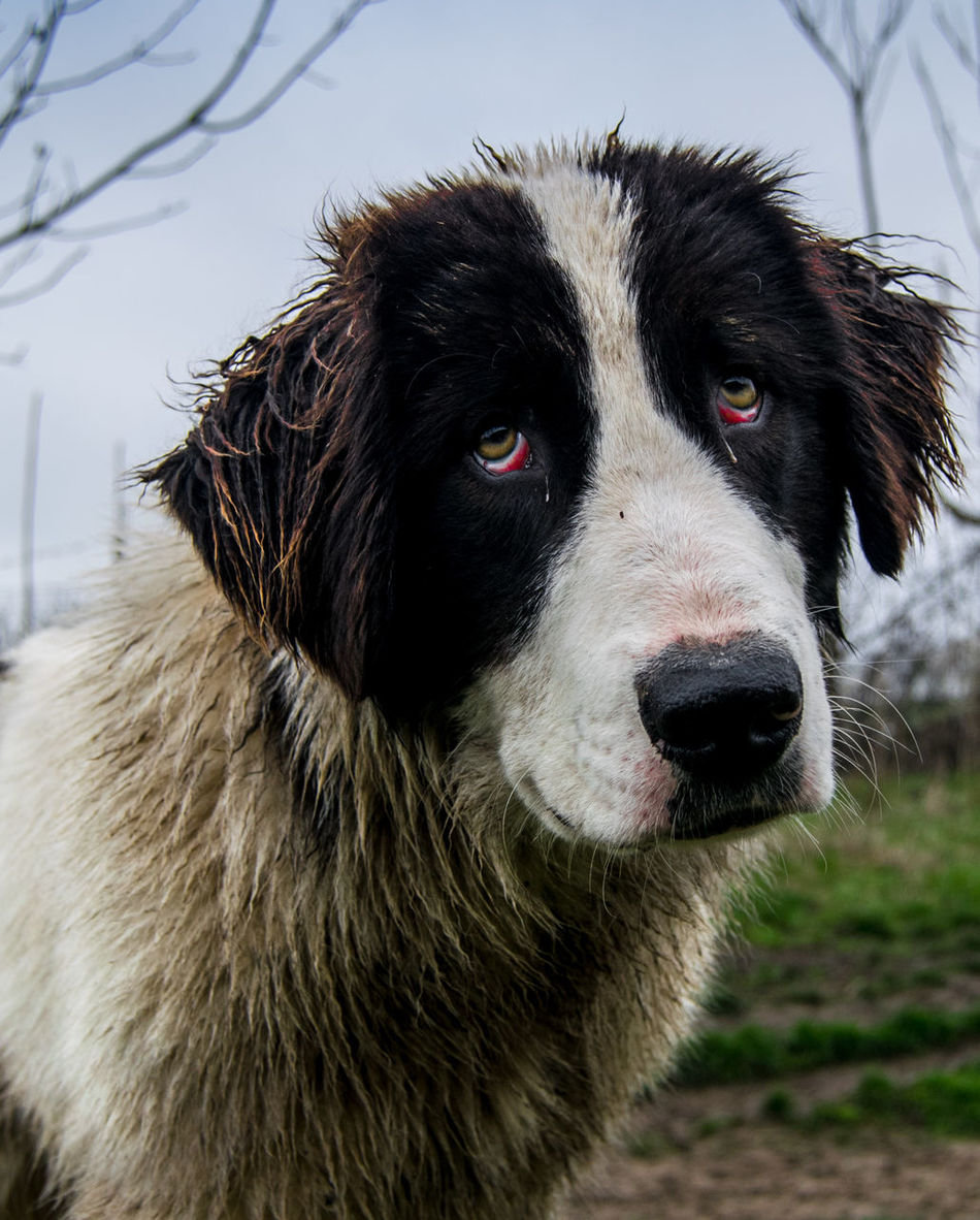 I lost my owner Animal Body Part Animal Head  Animal Themes Animals In The Wild Break My Heart Close-up Crying Dog Day Dog Domestic Animals Field Focus On Foreground Looking At Camera Mammal Mouth Open Nature No People One Animal Outdoors Pets Portrait Sad Sad Dog Sad Eyes Sadness
