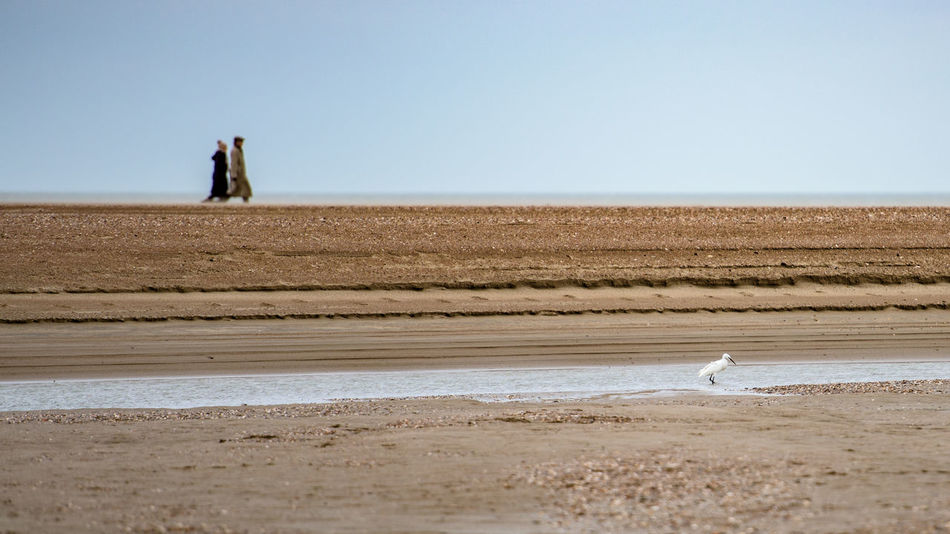 Beach Bird Coast Coastline Composition Copy Space Getting Away From It All Horizon Over Water Finding New Frontiers Little Egret Nature Negative Space Outdoors People Sand Sea Seascape Selective Focus Shore The Netherlands Vacations Walking Around Water Zeeland  Zwin