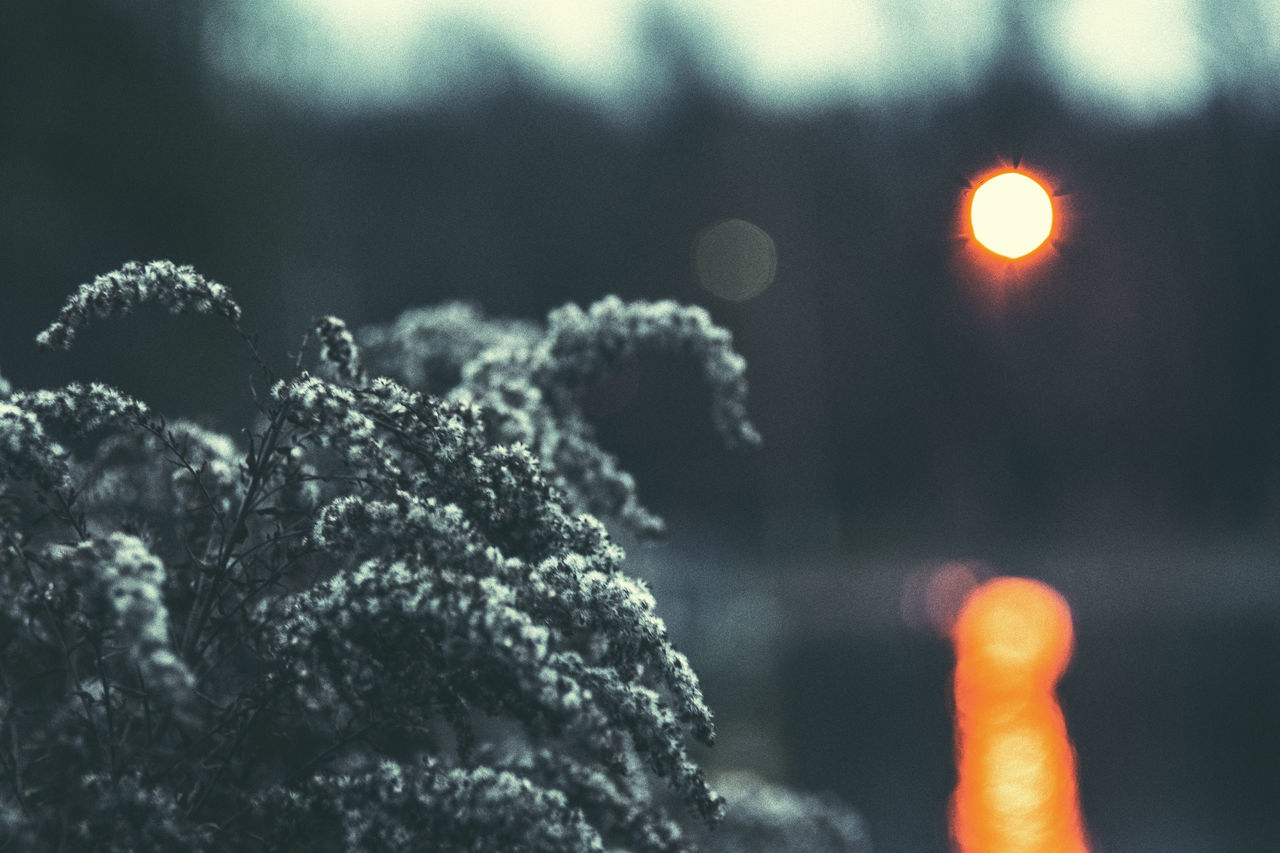 Abstract Backgrounds Bokeh Bokeh Lights Bokeh Photography Bokehlicious Close-up Dark Darkness And Light Detail Grass Helios Helios 44-2 Light Lights Moscow Moscow City Moscow, Москва Natural Pattern Nikon Nikonphotography No People Plant Plants Russia