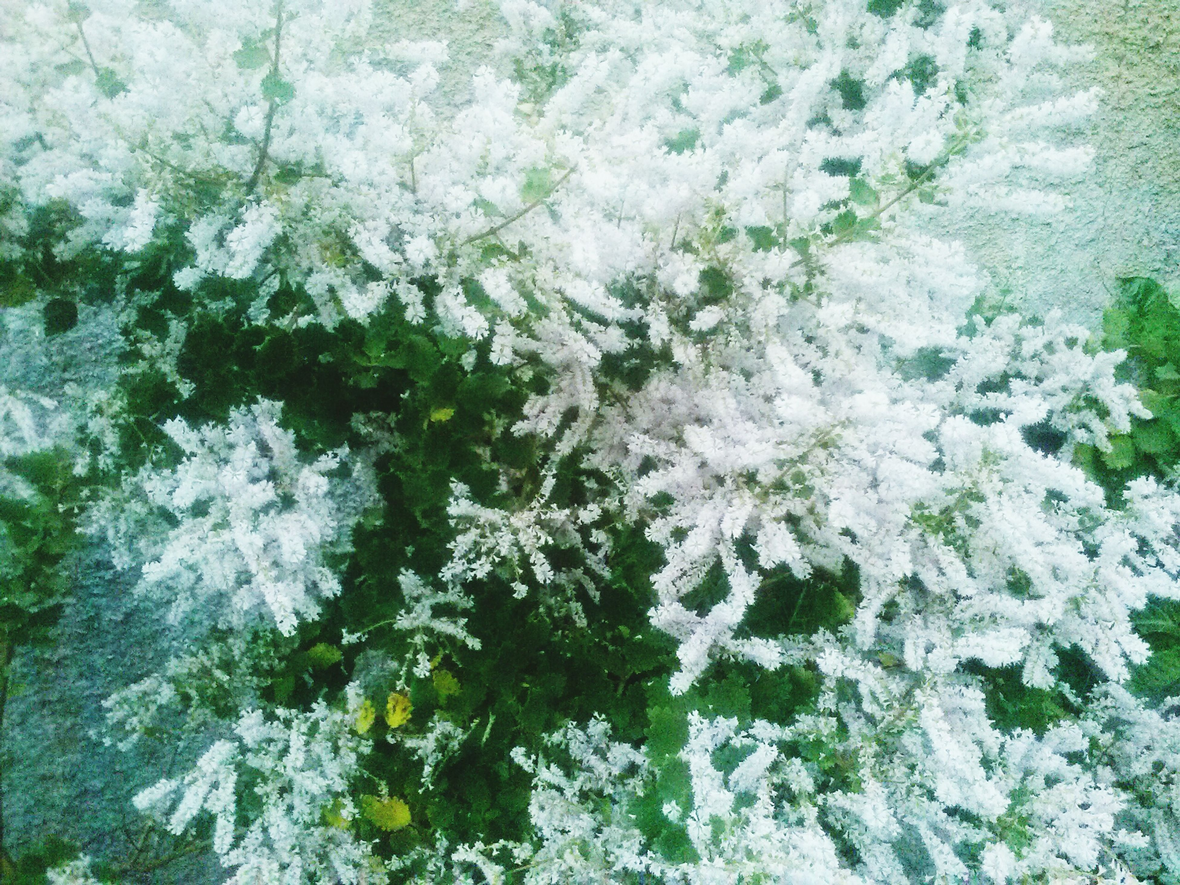 nature, snow, cold temperature, winter, growth, plant, frozen, beauty in nature, ice, no people, fragility, full frame, close-up, day, outdoors, backgrounds, freshness