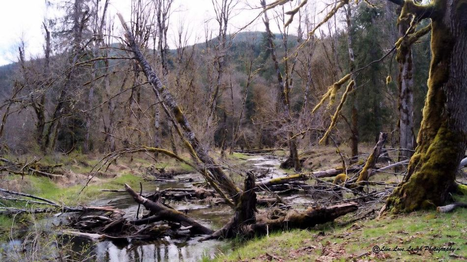 Tree Nature Tranquility Tranquil Scene Outdoors Landscape Forest Water Beauty In Nature Taking Photos Creekside Creek Life Creeks Creekside Photography Creek Photography Creek View Creeks And River Ways Creekside Trail Creek Landscape_photography