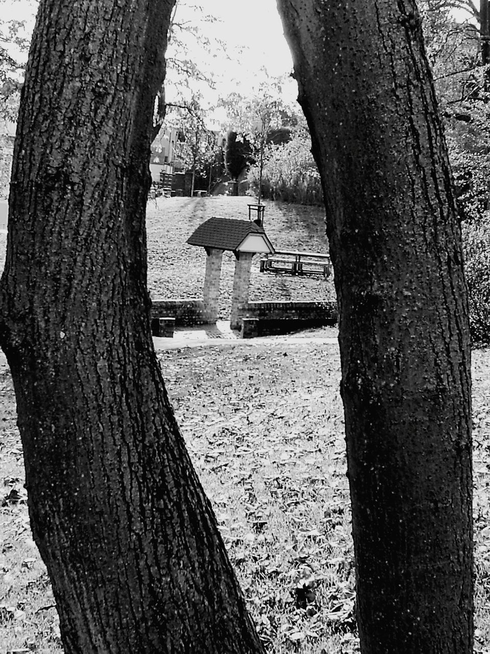 tree trunk, tree, day, built structure, architecture, no people, outdoors, nature, growth, bare tree, building exterior