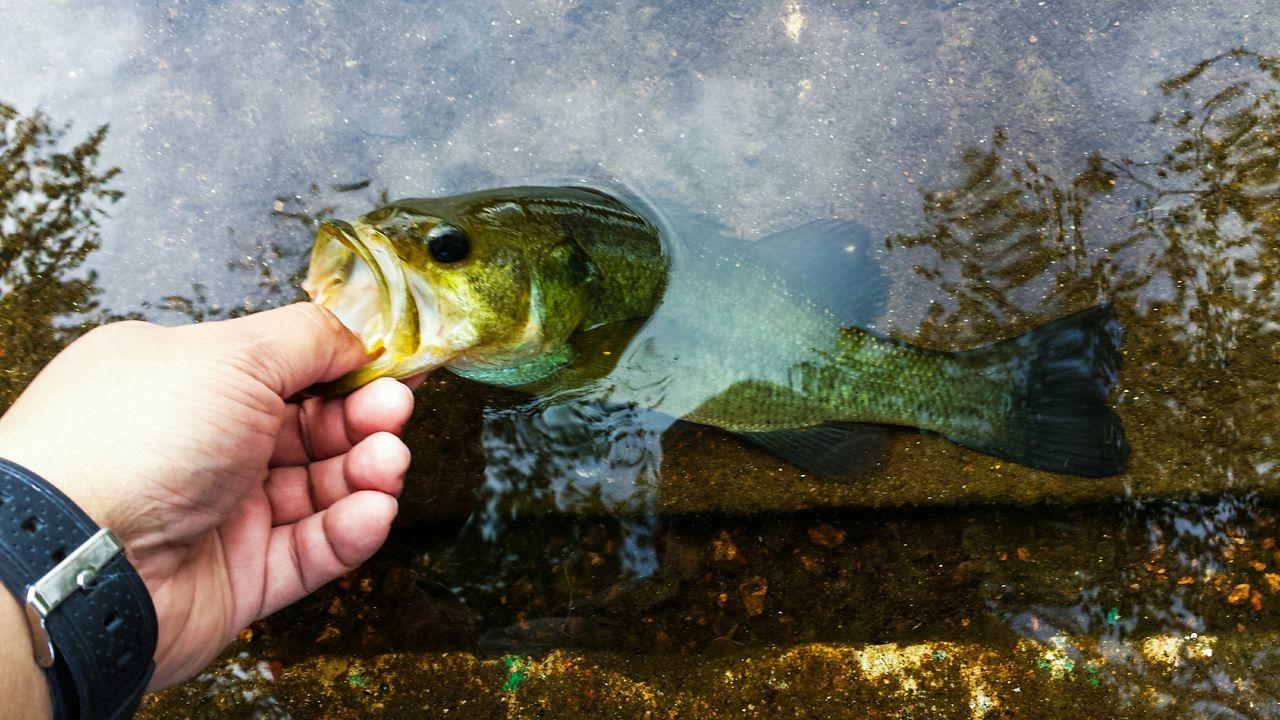 First Largemouthbass Bassfishing Gone Fishing Fishing of the yr.
