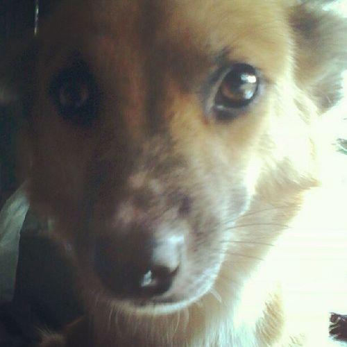 Fresh na ulit si Lablab! :)) Love Kitty Bibi Brownie Cute Pet