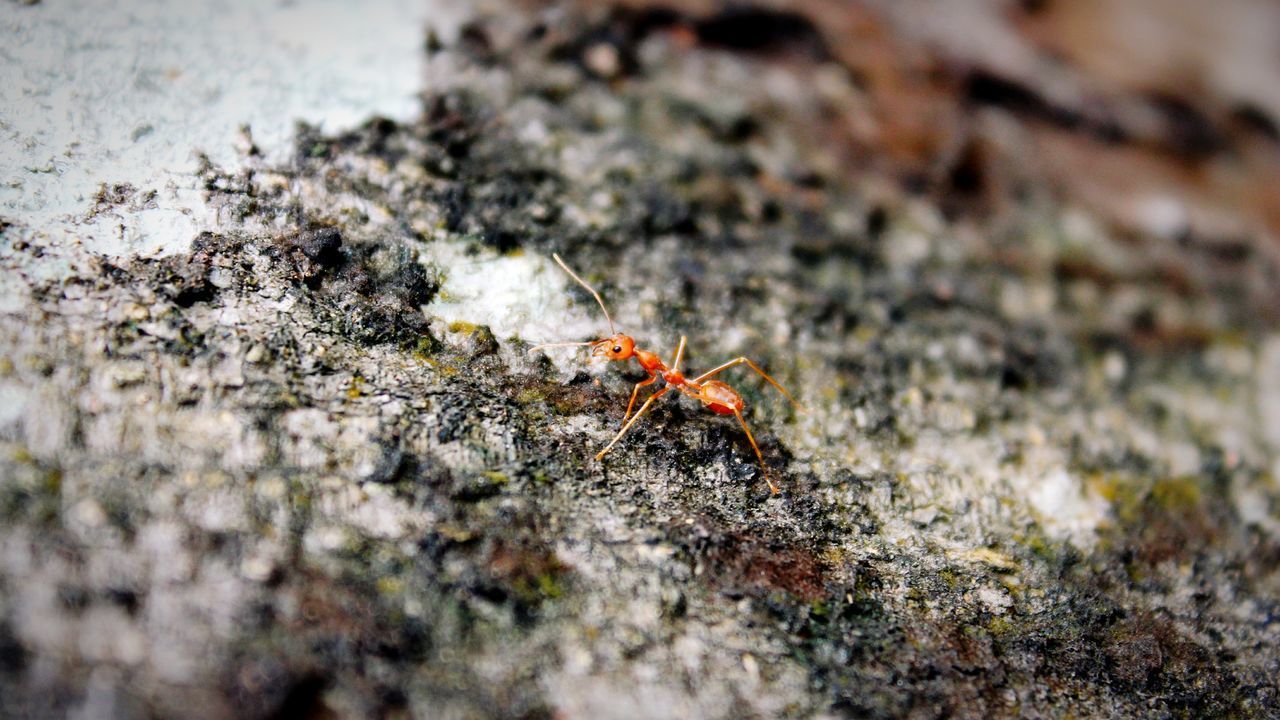 Insect Animals In The Wild Animal Themes Nature Animal Wildlife Ant Outdoors Close-up Sunlight Day Textured  No People Click Click 📷📷📷 Canon1200d Jungle Shoot Fragility Treetastic EyeEmNewHere Nagercoil India