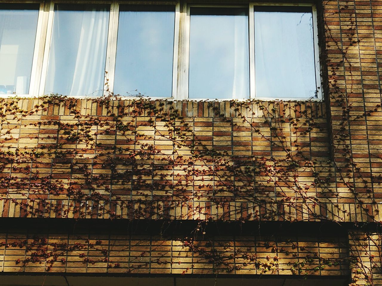 window, architecture, built structure, building exterior, brick wall, day, no people, low angle view, sky, indoors, close-up