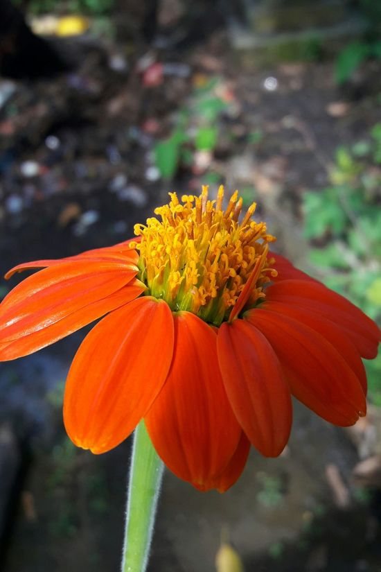 Flower Nature Orange Color Freshness Outdoors Beauty Of Flowers Photo Of The Day