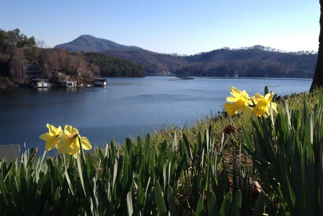 Beauty In Nature Lake Lake Lure NC No People Relaxing Moments Spring Flowers Tranquil Scene Western North Carolina Yellow Flowers